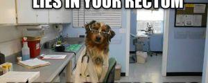 Doctor dog…