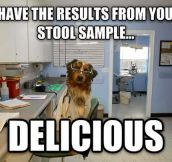 Scientist dog strikes back…