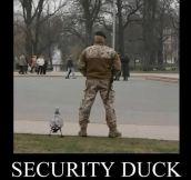 Security Duck is on patrol…