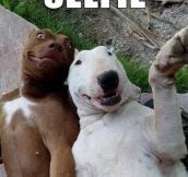 Dogs get in on the selfie action…