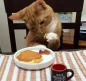 Eating breakfast…