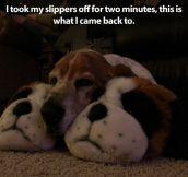 Sleeping little buddies…