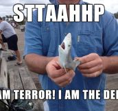 I'm a terrifying, tiny shark…