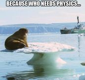 Next on Mythbusters: does gravity affect walruses?