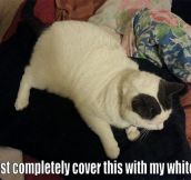 When cats see black clothes…