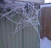 Wintery spiderweb…