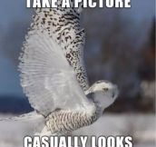 Photogenic owl