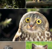 CATS PLUS OWLS