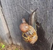 Snails need bros too