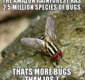 That's a lot of bugs