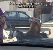 You will never be as cool as this monkey