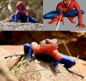 When Spiderpig doesn't cut it…