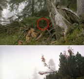 The art of camouflaged snipers…