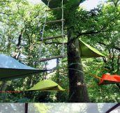Tree tents…