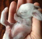 Newborn baby bunny…
