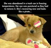 The cutest rescued dog…