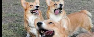 25 Very Derpy Dogs