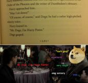 Mr. Doge, I'm Harry Potter…