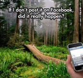 If a tree falls in the forest and nobody with a phone is around…
