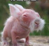 Miyagi bunny…