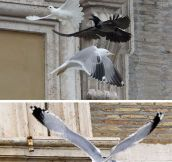 That seagull is a real bird of pray…