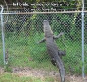 Florida: The Australia of America…
