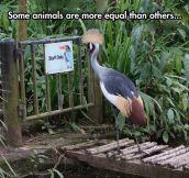 Black beak is good, orange beak is better…