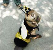 A little honey beaver bee…