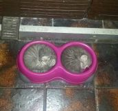A bowl of kittens…