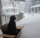 I should buy a sled cat…