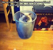 Trashcat watches the enemy…
