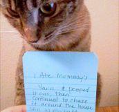 I ate mommy's yarn…