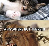 Cats can be so sensitive…
