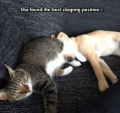 Best sleeping position…