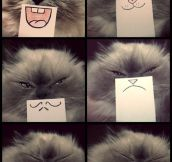 Cat emotions…