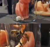 This candle is equal parts creepy and cool…