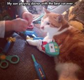 This is one patient cat…