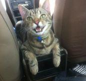 Nice ride kitten…
