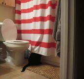 A cat's curiosity…
