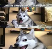 Punny dog…
