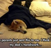 Visual dad jokes…