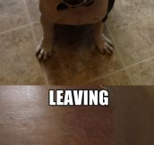 Coming home vs. leaving…