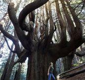 Whoa, tree…