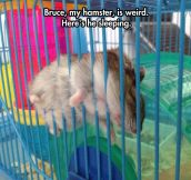 The weirdest hamster…