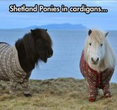 Stylish ponies…