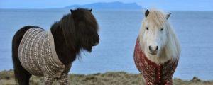Stylish ponies…