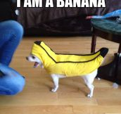 Banana power…