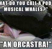 Whale joke…