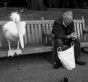 Pelican and old man sharing a bench in the park…