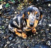 Camouflaged cuteness…